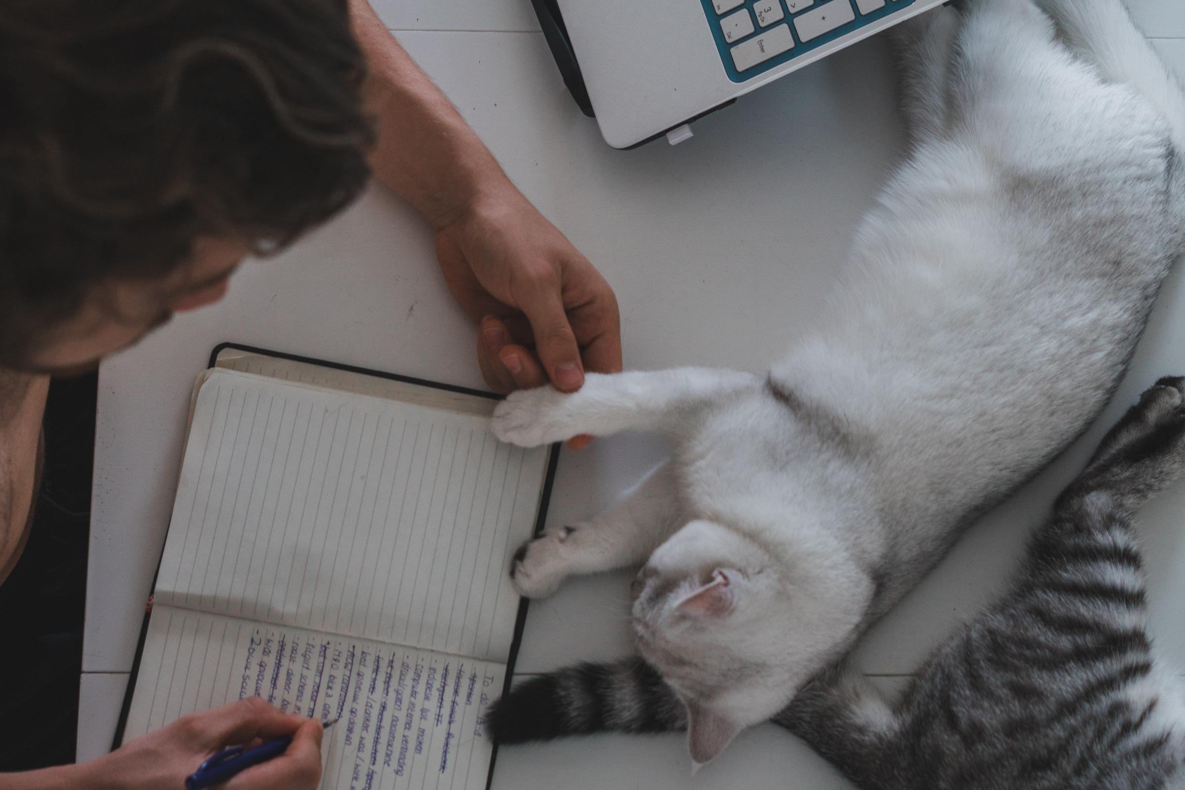 Studeren met kat
